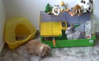 C mo cuidar conejos enanos - Casas para conejos enanos ...