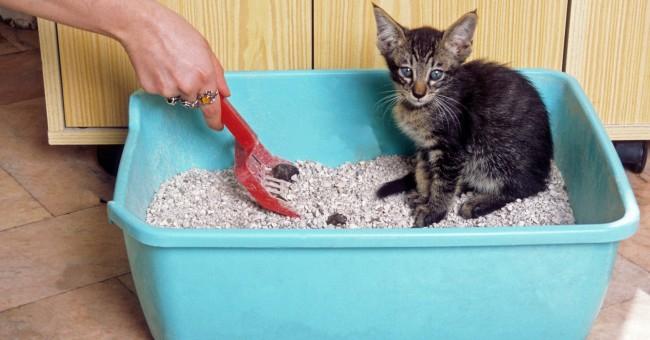 Consejos para cuidar a un gato bebé destetado
