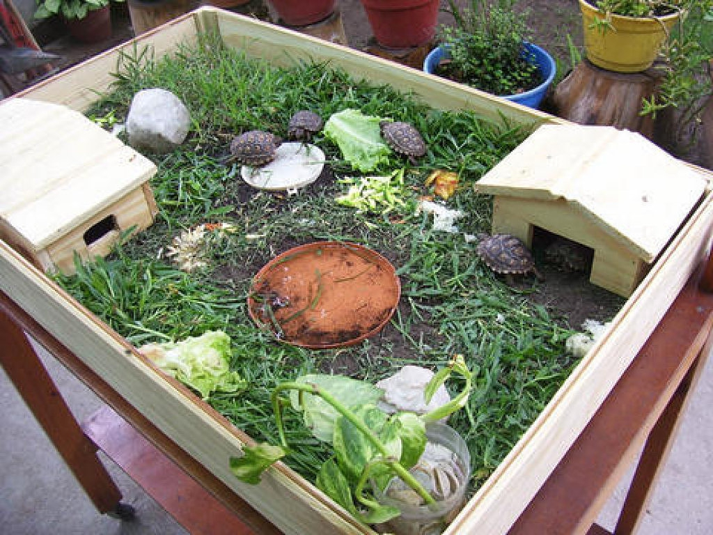 C mo cuidar una tortuga en casa - Como decorar un estanque ...