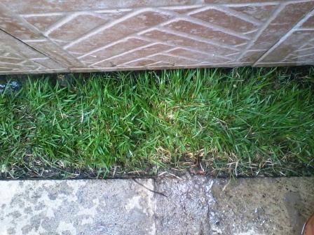 C mo incorporar c sped al jardin for Como quitar las hormigas del jardin
